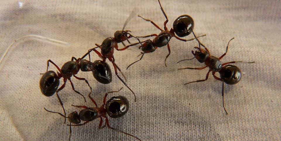 formiche-cambiamenti-climatici