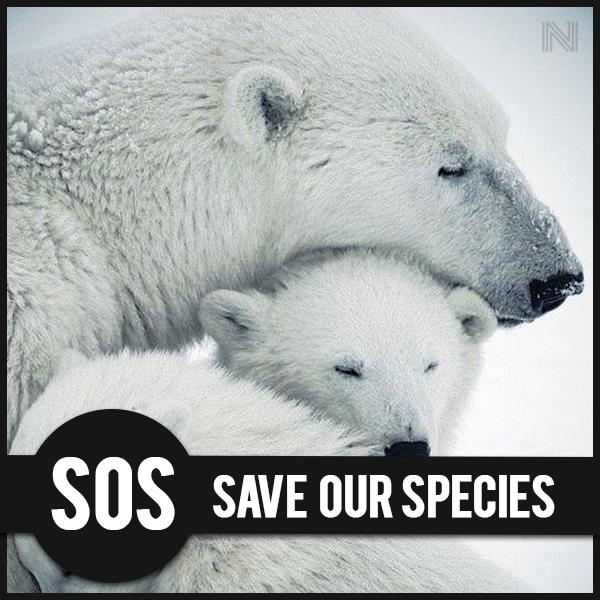 Orso polare, specie a rischio