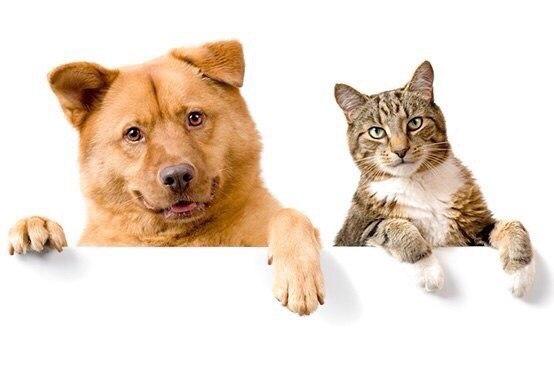 Report, inchiesta sul giro d'affari che ruota intorno a cani e gatti
