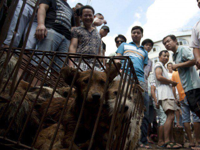 Muoiono dopo aver mangiato carne di cane