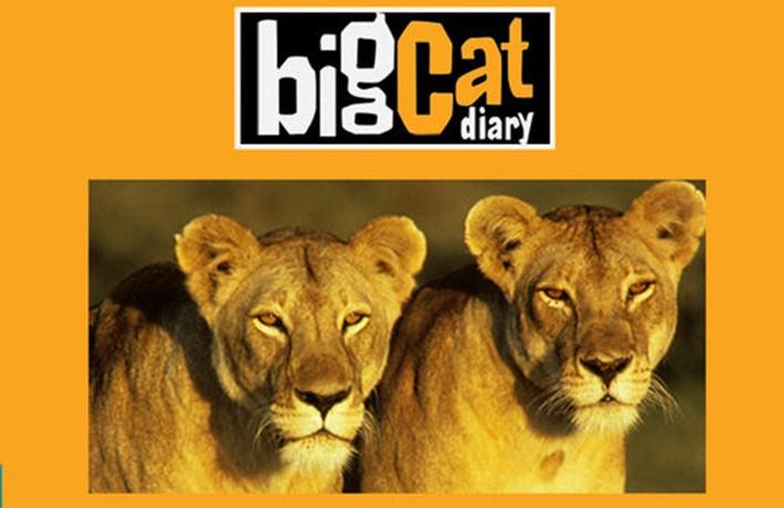 Kenya: 8 leoni avvelenati da un reality