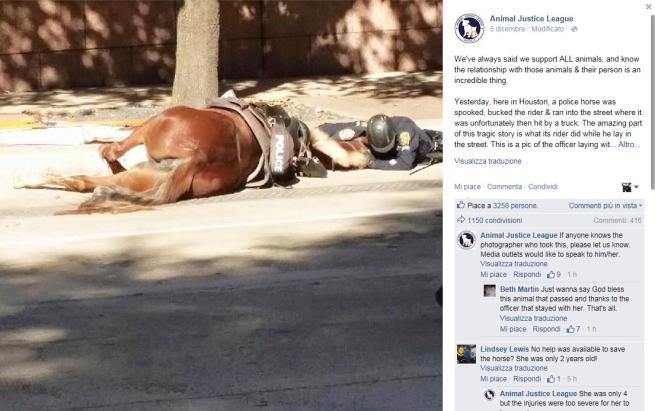 Cavallo Charlotte che commuove il web
