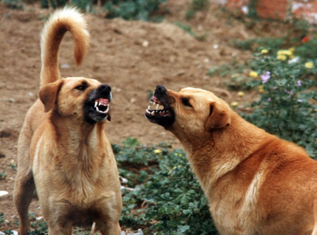 Donna colta da malore viene divorata dai cani dopo il decesso