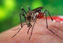 Virus Zika Emilia Romagna infette persone a Modena e Coreggio
