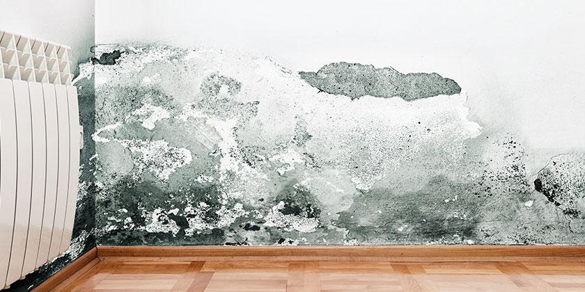Come eliminare la muffa dal muro definitivamente
